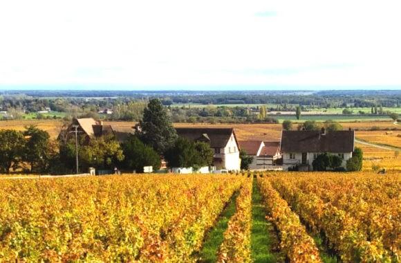 2018 Burgundy En Primeur
