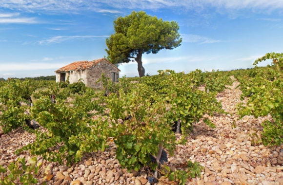 An Introduction To: The Rhône Valley