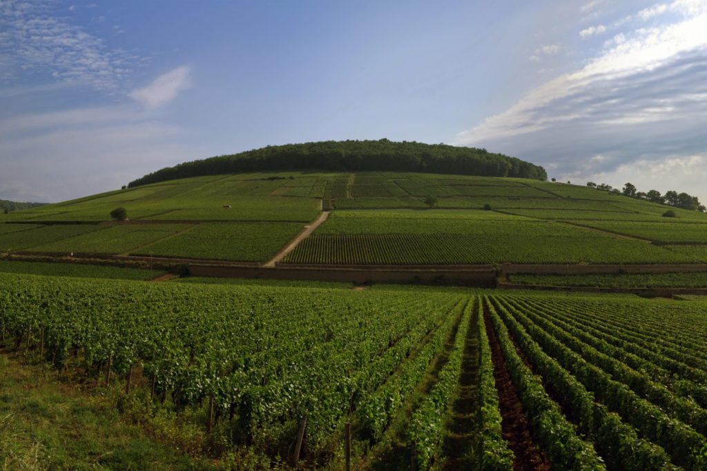 An Introduction To: White Burgundy