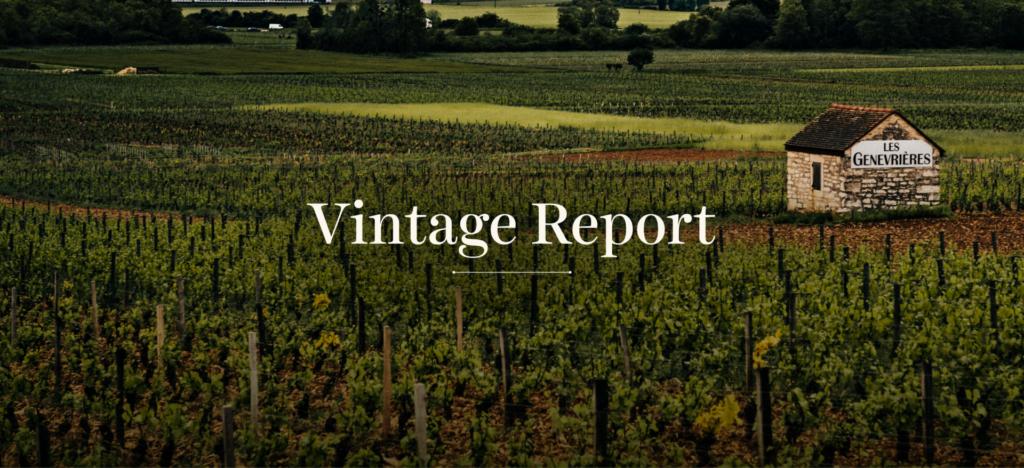 2019 Burgundy Vintage Report